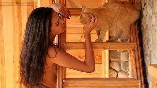 Смешные картинки про кошек и котят Выпуск №33  FUNNY CATS СМЕШНЫЕ КОШКИ(, 2016-12-31T12:28:28.000Z)