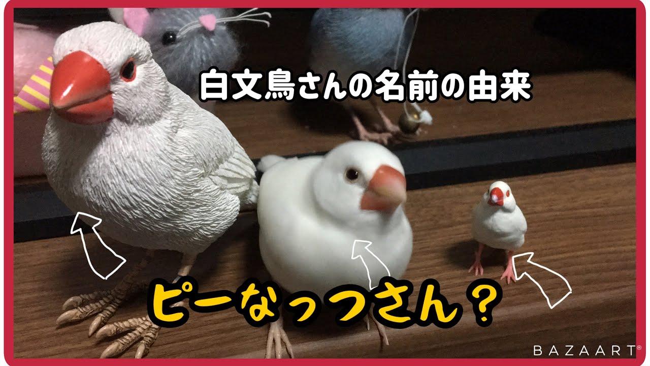 由来 文鳥 の 文鳥の日とはいつ?意味や由来、イベントは。「手に幸せ」を運ぶ鳥