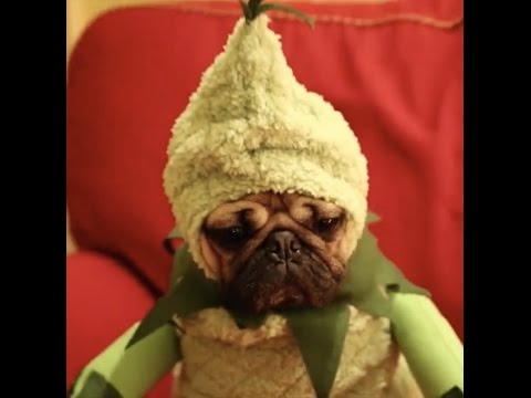 Doug The Pug - Christmas Movie Spoof Comp