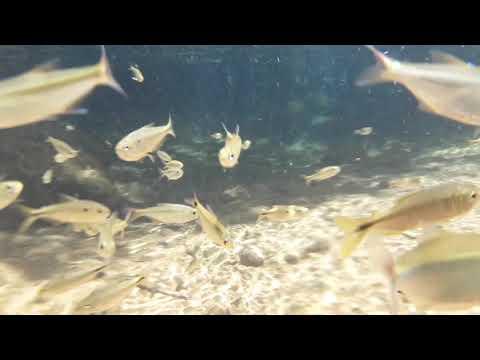 Chapada dos Guimarães -  Poço das Antas