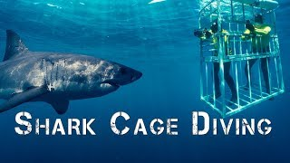 Adventure Africa  | Shark Cage Diving