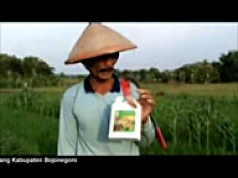 Testimoni Pupuk Organik BioBoost dari K-Link
