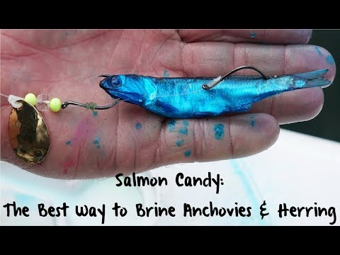 Salmon Candy: The Best Way To Brine Anchovies & Herring
