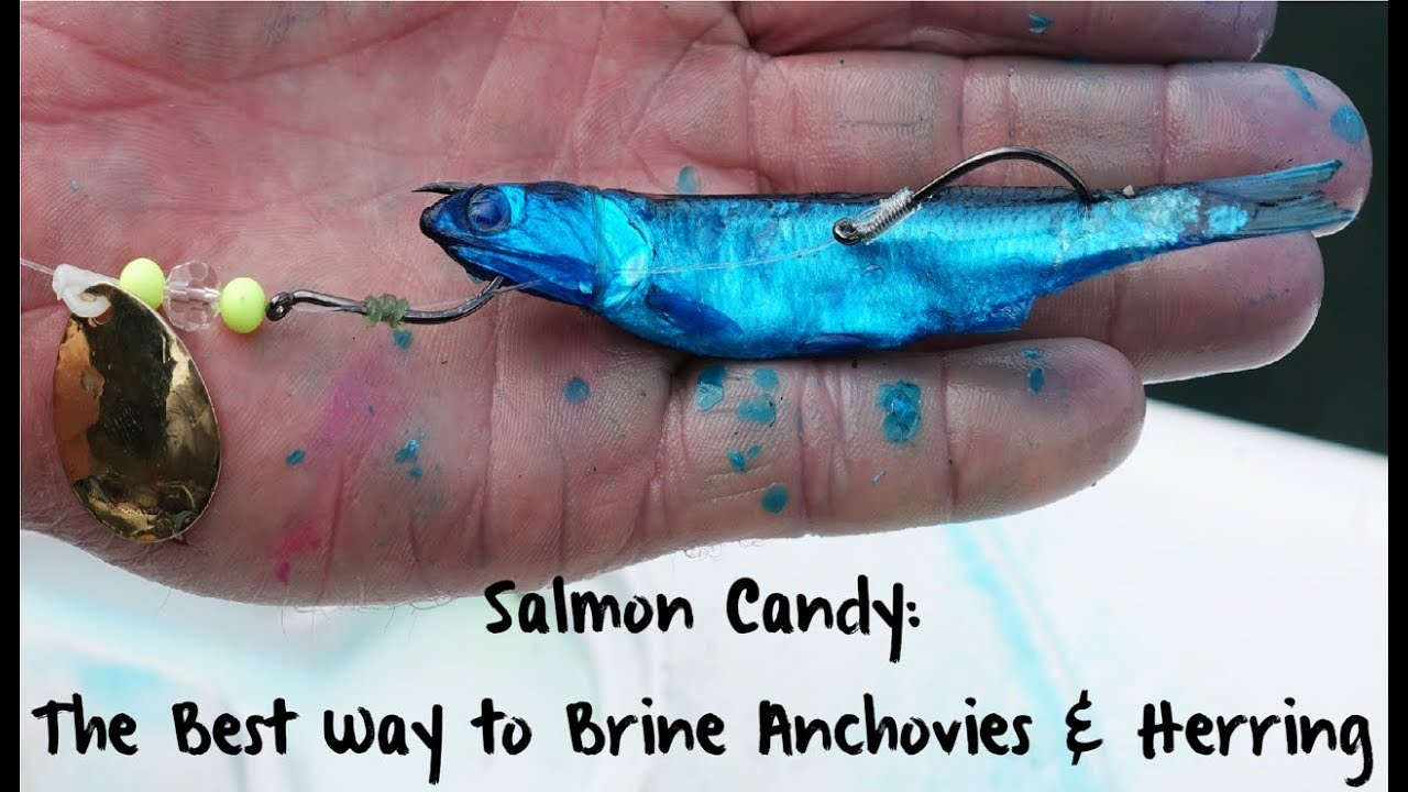 Bait salt for to how anchovies How do