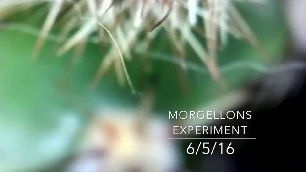 Morgellons Experiment / Moving Fibers on Cactus / Jumping Fiber