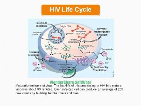 HIV/AIDS powerpoint presentation - YouTube