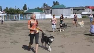 0512: выставка собак в Николаеве