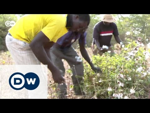 Phasing out GMO cotton in Burkina Faso | Eco-at-Africa