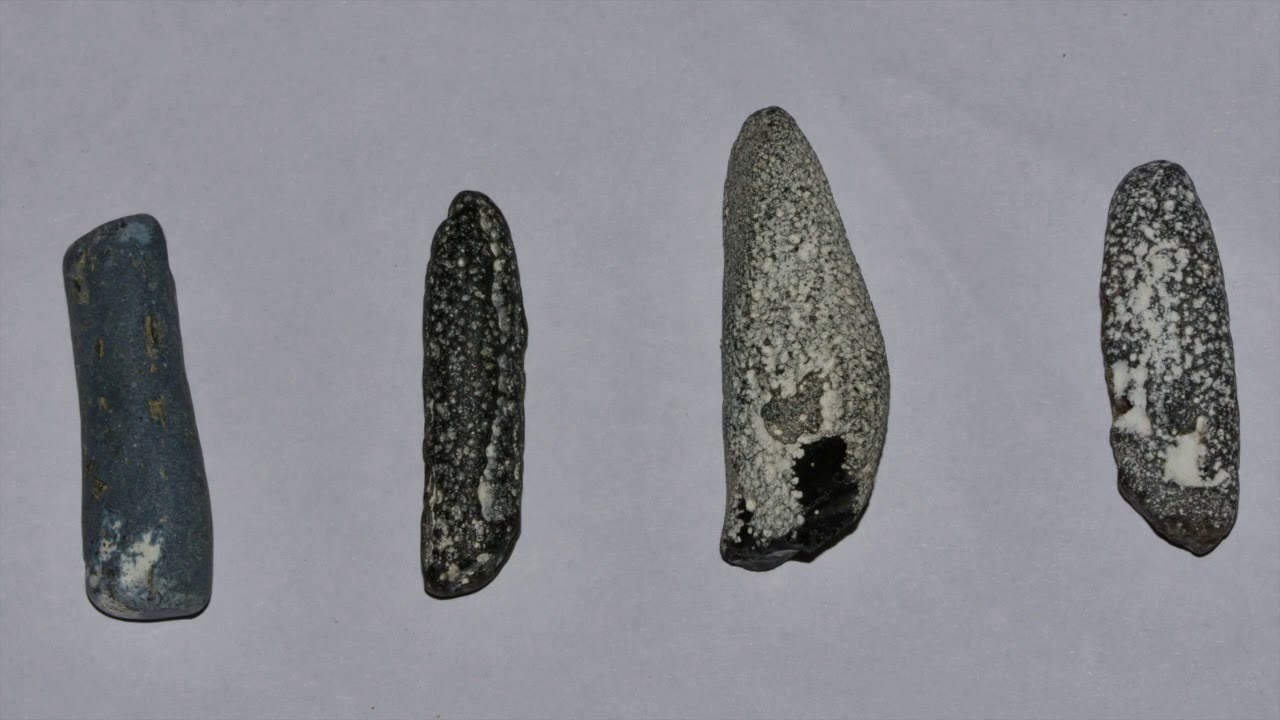 Natur hjemmeskole 001//Fossil jagt ved Sangstrup klint