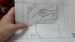 Cách làm squishy giấy 3d hộp ngũ cốc _Ngọc Thủy Channel