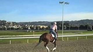 Wild Promises gallops - Golden Gate Fields, 12-20-08
