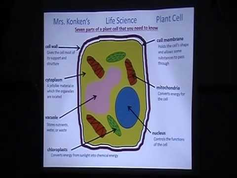 Copy Of Chapter 4 Plant And Animal Cells Lessons Tes Teach