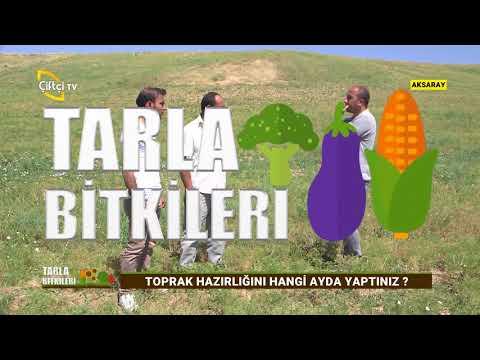 Kimyon Yetiştiriciliği - Tarla Bitkileri / Çiftçi TV