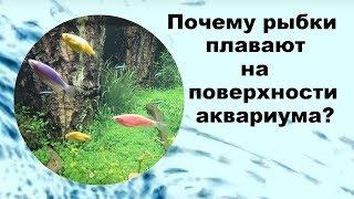 Почему рыбки плавают на поверхности аквариума?