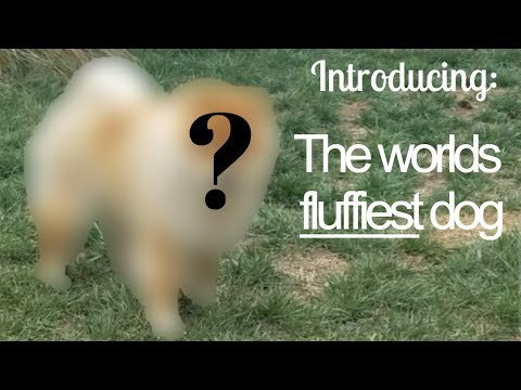 introducing:-the-fluffiest-dog-in-the-world!