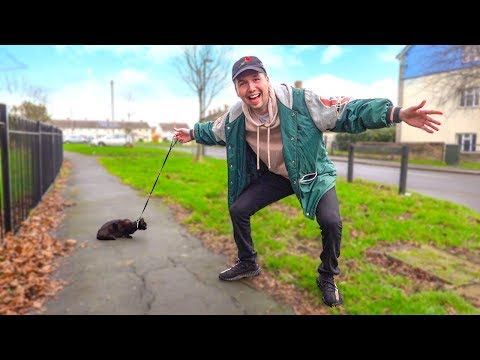 download Taking a Cat for a Walk in the UK