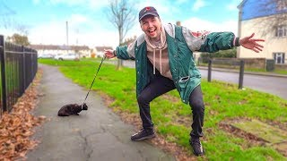 Taking a Cat for a Walk in the UK