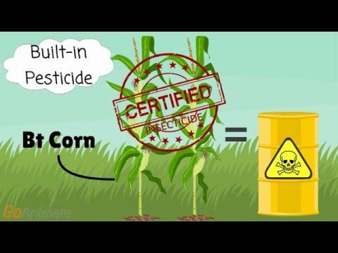 GMO 101: A Food Revolutionary's Crash Course