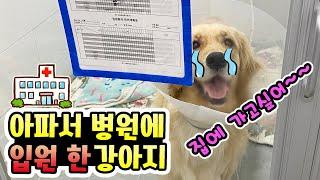 강아지가 아파서 병원에 입원했어요! ㅠㅠ 다른 강아지피…
