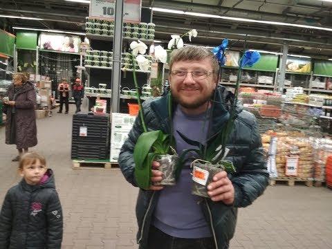 Как купить орхидею не дорого.