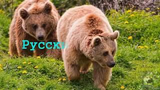 Русский алфавит для детей. Азбука и названия различных животных