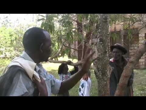 Birth of the Kikuyu Tribe