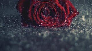 Anbum Neethane Uyirum Neethane || Album Song WhatsApp Status || Tamil Album Girls Love Failure Song