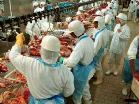 Negative impacts of factory farming