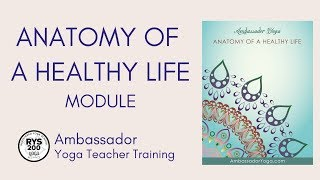 Anatomy of a healthy life - yoga teacher training