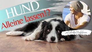 Wie lange kann man einen Hund alleine lassen? ProfiTipp/Hundeschule