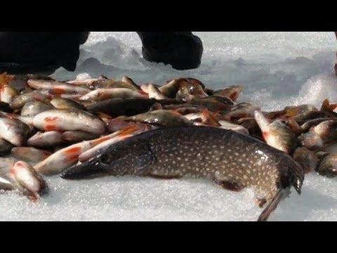 Рыбалка Сетями! Немного