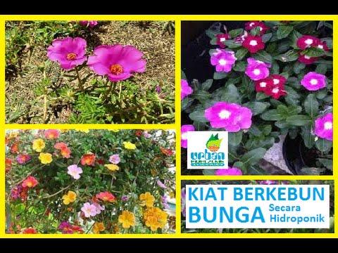 Kiat Berkebun Bunga Secara Hidroponik