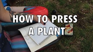 How To Press A Plant