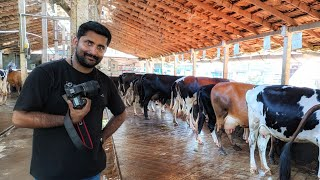 പശു വളർത്തൽ [ECO OWN MEDIA] Dairy farm in kerala