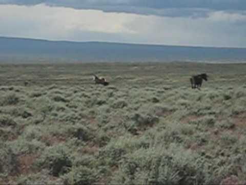MOTOvation Montana - Episode 2 - Texas, New Mexico & Colorado