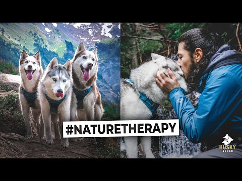 Mountain Hiking With Dogs | Husky Squad