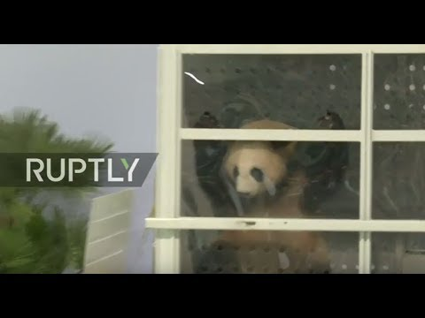 LIVE: Berlin's new panda couple lands at the capital's airport - Press conference