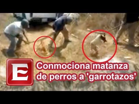 """Conmociona matanza de perros a """"garrotazos"""" en Huatulco"""