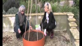 Grow Rings - Runner Bean Growing.wmv