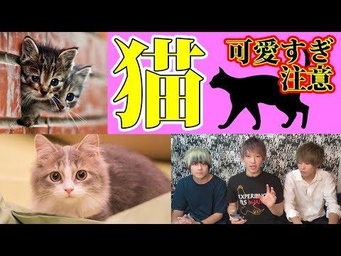 【都市伝説】ネコの特殊能力と人間に与える影響がスゴイ。【ノンラビ】