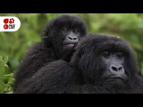 IUCN Red List of Threatened Species™: November 2018 Update