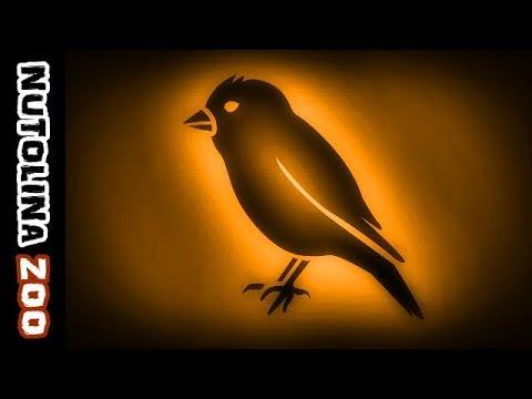 Sparrow sound / Sparrow call / Canto de gorrion / Sparrow sounds