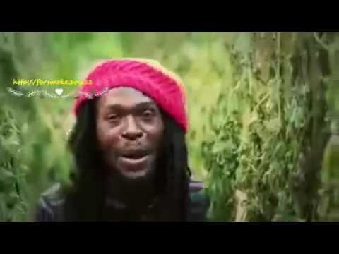 Gaja- Marijuana song- Towfiq Rassy