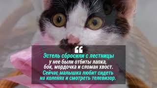 1 марта - День кошек в России