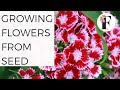 Growing Flowers from Seed Direct Sow Summer Annual Flowers Gardening Cut Flower Farm Organic