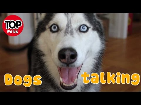 Top dogs talking like humans