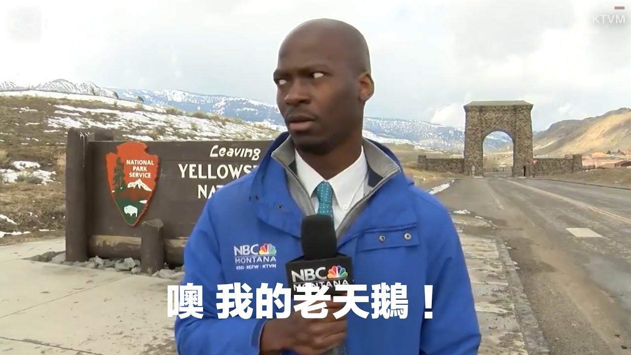 記者驚見美洲野牛,反應超級黑人美式 JRLEE暖新聞 Ep.003