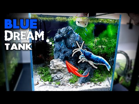 Aquascape Tutorial: BLUE DREAM SHRIMP Nano Cube (How To: Planted Aquarium Step By Step Setup)
