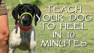Teach Your Dog To Heel In Less Than 10 Minutes