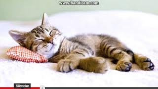 Por qué a tu gato le gusta dormir contigo.